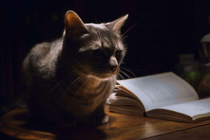 #animal #cat #domestic animal #fluffy #pet #purebred cat #pussycat #table