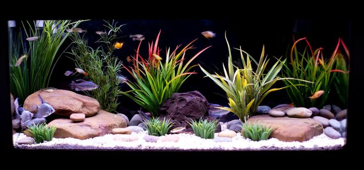 5 Aquascaping Tips Using Plastic Plants That Will Make ...