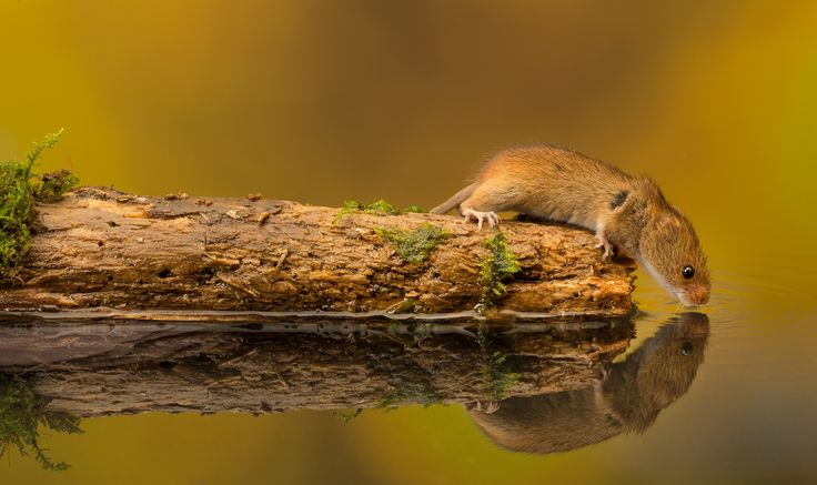 Photo end of the road.. by Mark Bridger on 500px