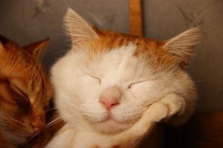 First, we need to ensure adequate sleep