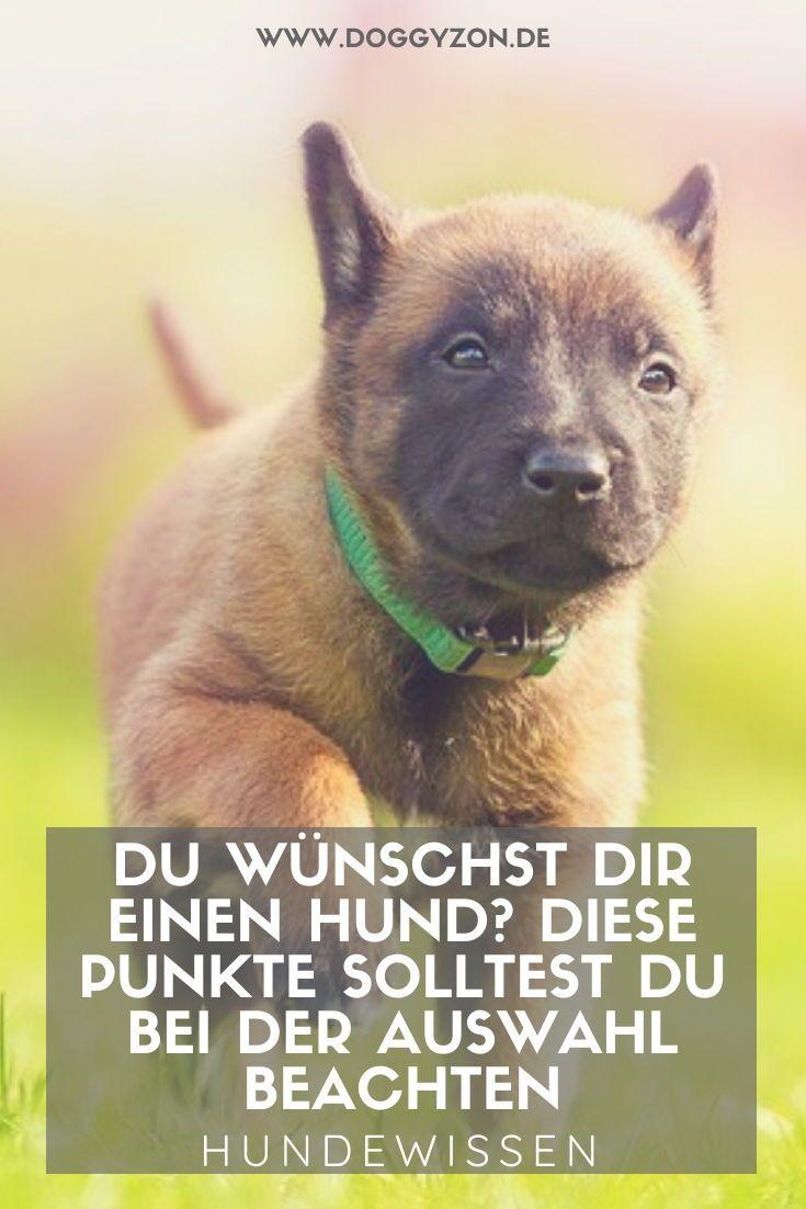 Anschaffung Eines Hundes Rassehund Oder Tierschutzhund Gross Oder Klein In 2020 Hunde Hund Adoptieren Welcher Hund