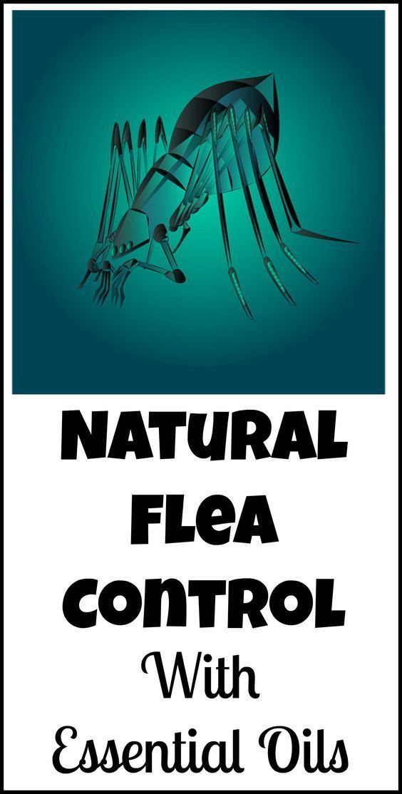 How to control fleas naturally, with essential oils instead of potentially toxic chemicals.