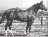 famous racing quarter horses | Doc Bar, one of the most famous Quarter Horses in history.