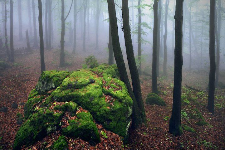 Brothers Grimm�s Homeland by Killian Schoenberger