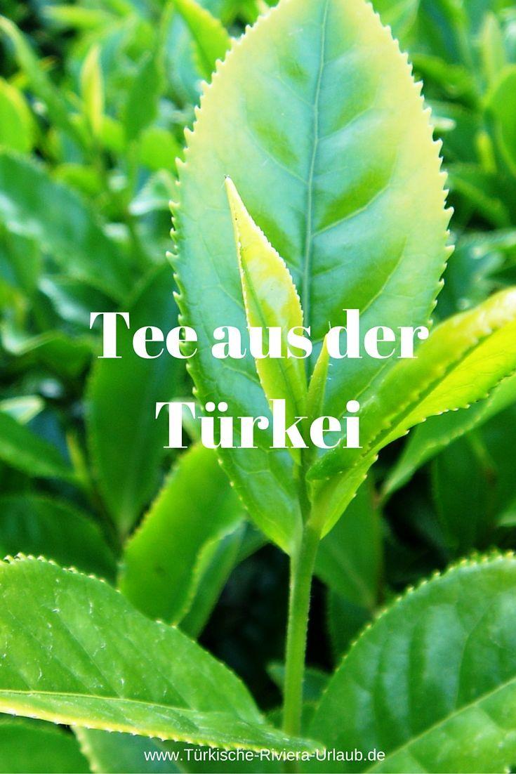 Der Türkische Tee, auch Cay genannt, ist eine Art Schwarztee. Angebaut wird er Großteils in der am Schwarzmeer gelegenen Provinz Rize. >>> http://www.tuerkische-riviera-urlaub.de/tuerkischer-tee-cay/