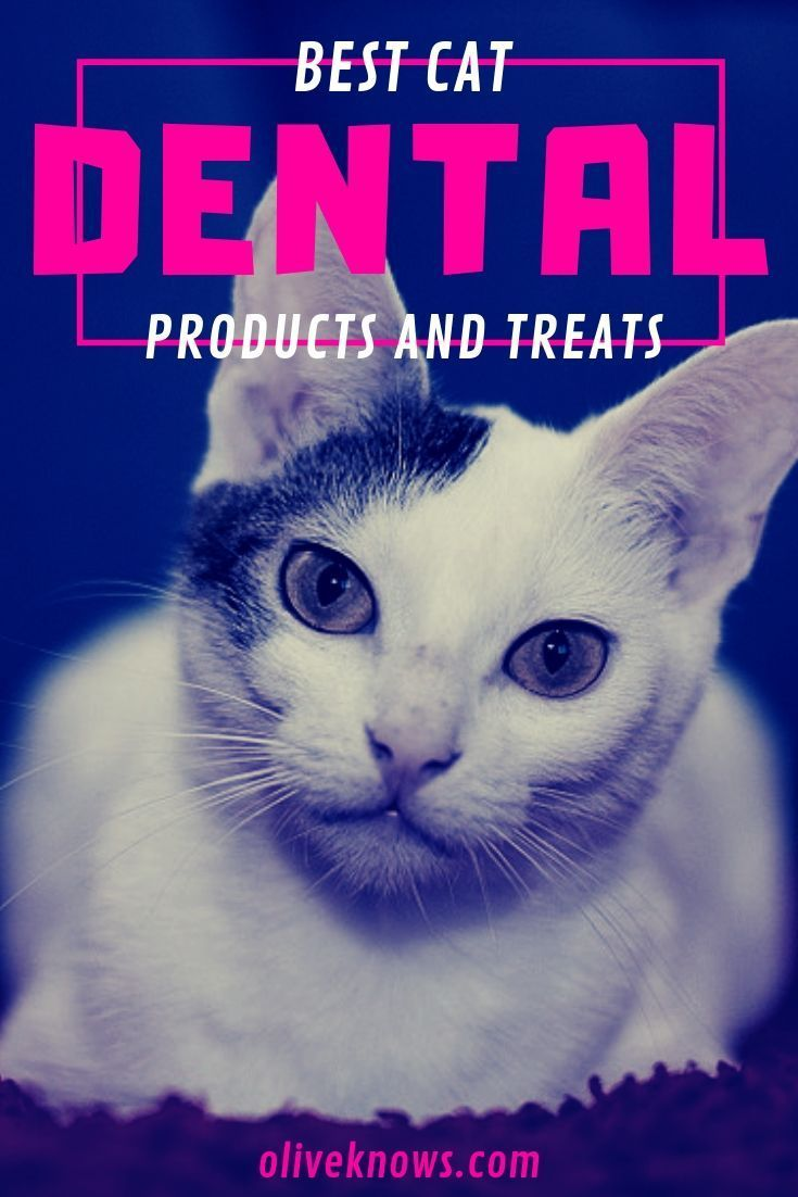Best Cat Dental Products And Treats Oliveknows Cat Dental Health Dental Care Cool Cats