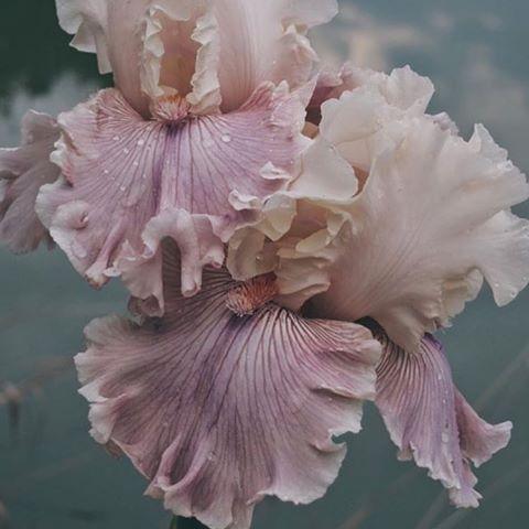 ____#flowersforever  🌾🌿 / 📸 via @mondomondo_
