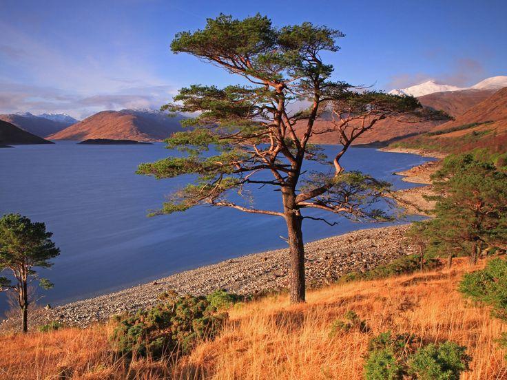 imágenes de árboles, fondos de pantalla de los acantilados, vector de la hierba, fondos de otoño, material de lago