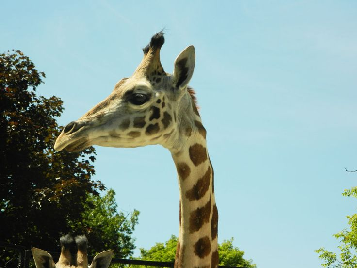 One of our new GIRAFFE!!