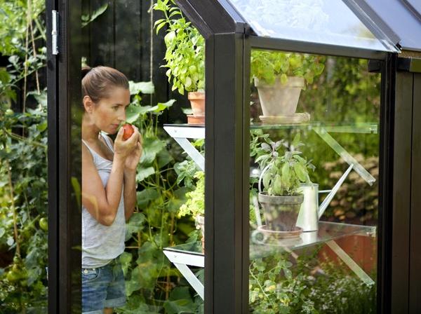 Fräscha grönsaker från trädgården