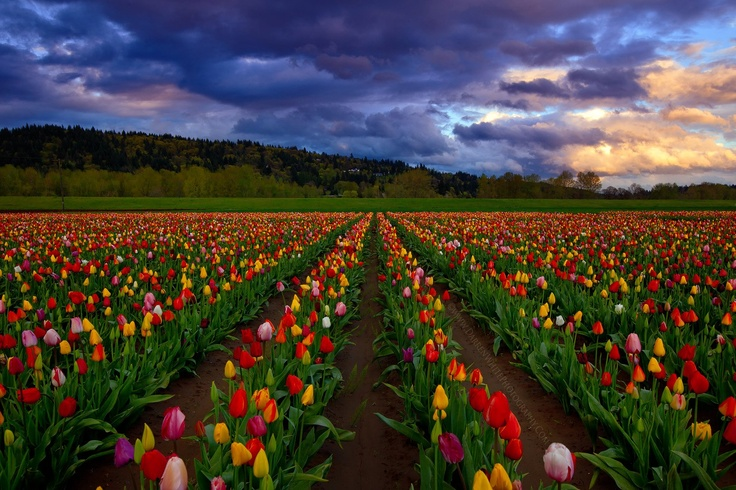 Landscaping Woodland Wa : Images about tulip gardens woodland wa on
