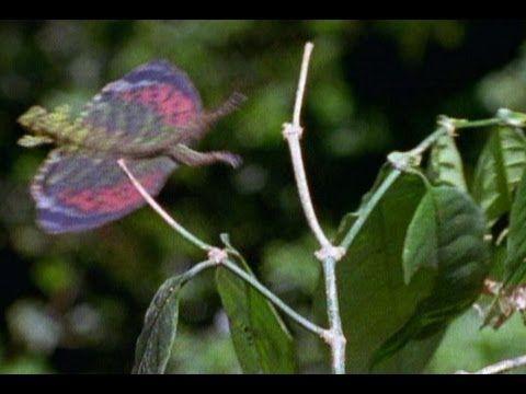 how to fly anaconda through mailslot