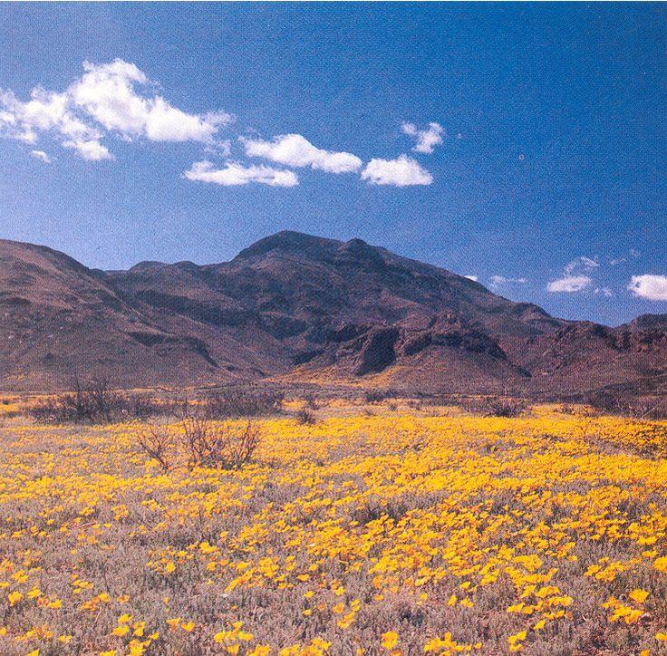 83 Best Images About El Paso Texas On Pinterest: 23 Best El Paso Texas........ Images On Pinterest