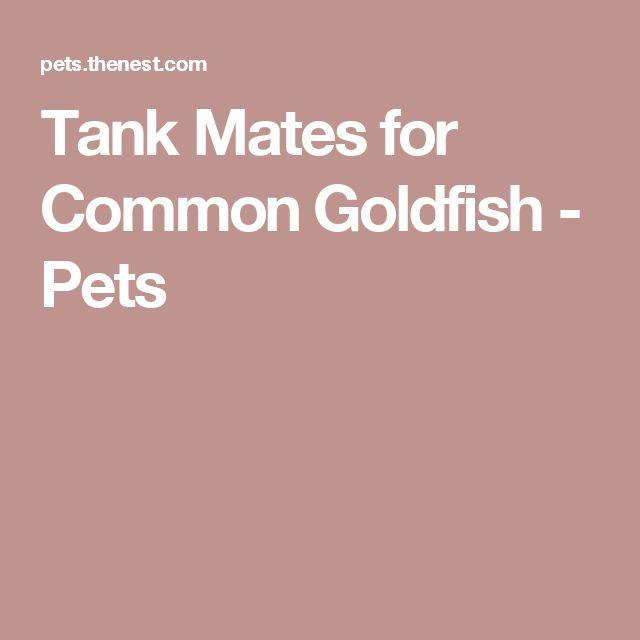 Tank Mates for Common Goldfish - Pets