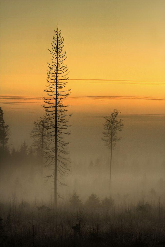 Mäntsälä, Finland   - Mikko Muinonen