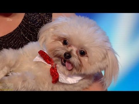 Britain's Got Talent - Trip Hazard and Lucy Adorable Dog Act Full Audition