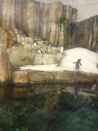 Book your tickets online for Biodome de Montreal, Montreal: See 4,070 reviews, articles, and 2,144 photos of Biodome de Montreal, ranked No.15 on TripAdvisor among 396 attractions in Montreal.