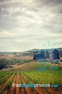 Stormy Sky Autumn Vineyard View Of Tuscany In Italy. Stock photo.