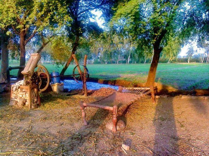 321 Best Images About Rangla Punjab India On Pinterest Bhangra Dance Festivals And Amritsar