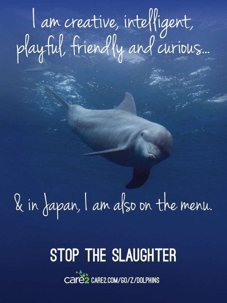 Petition: The Cove: Help Save Japan's Dolphins