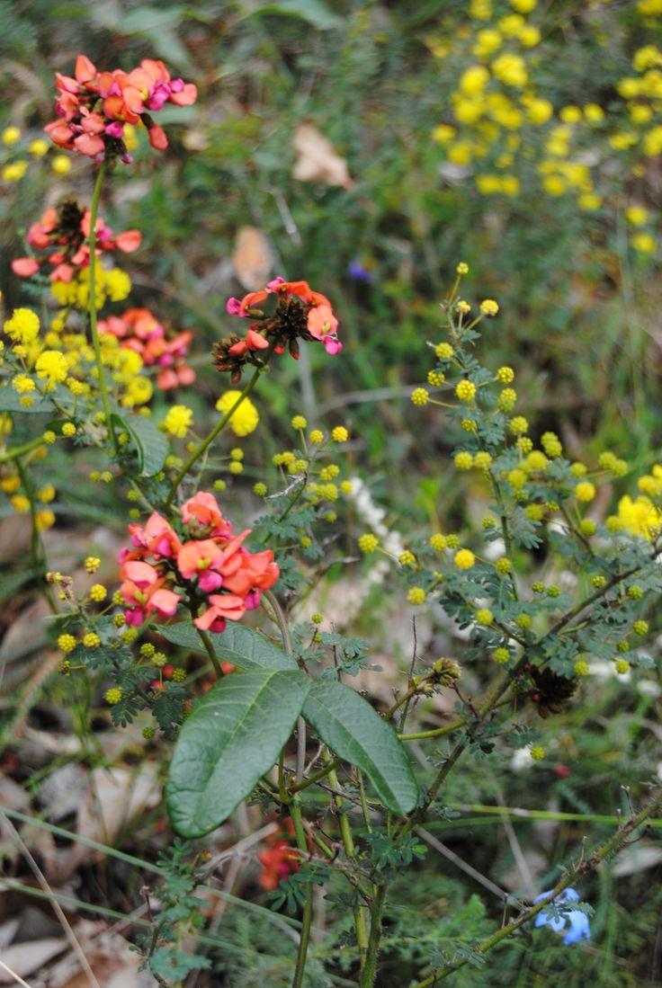 West Australian wildflowers. By Judith Ann.www.beautifulwriting.com.au