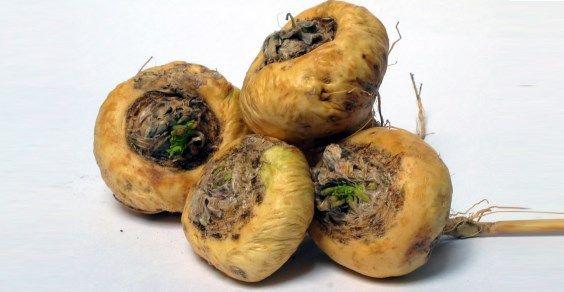 Maca: proprietà, usi e dove trovare il ginseng peruviano