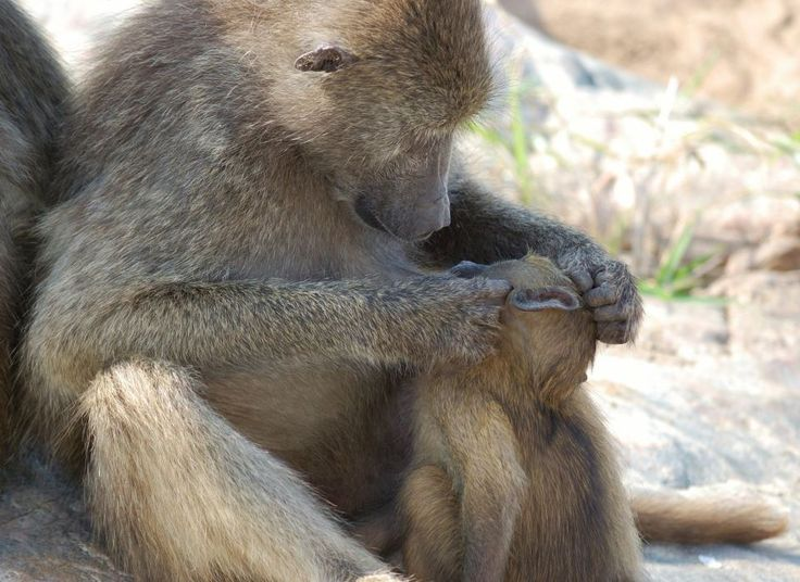 Inspecting baby baboon. #EpicEnabled