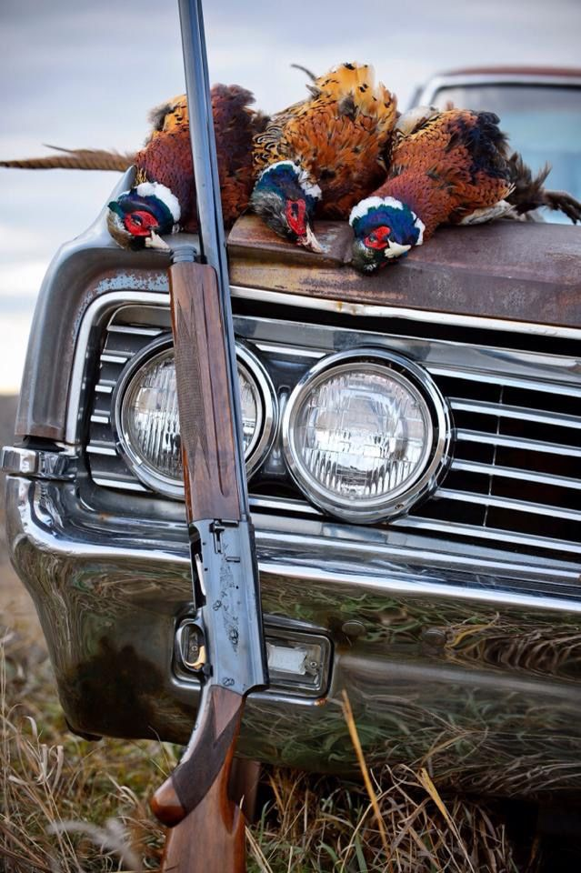 Visit #gentlemanbobwhite for more pics about bird hunting, good dogs, fine guns, and a lovely lady or two.