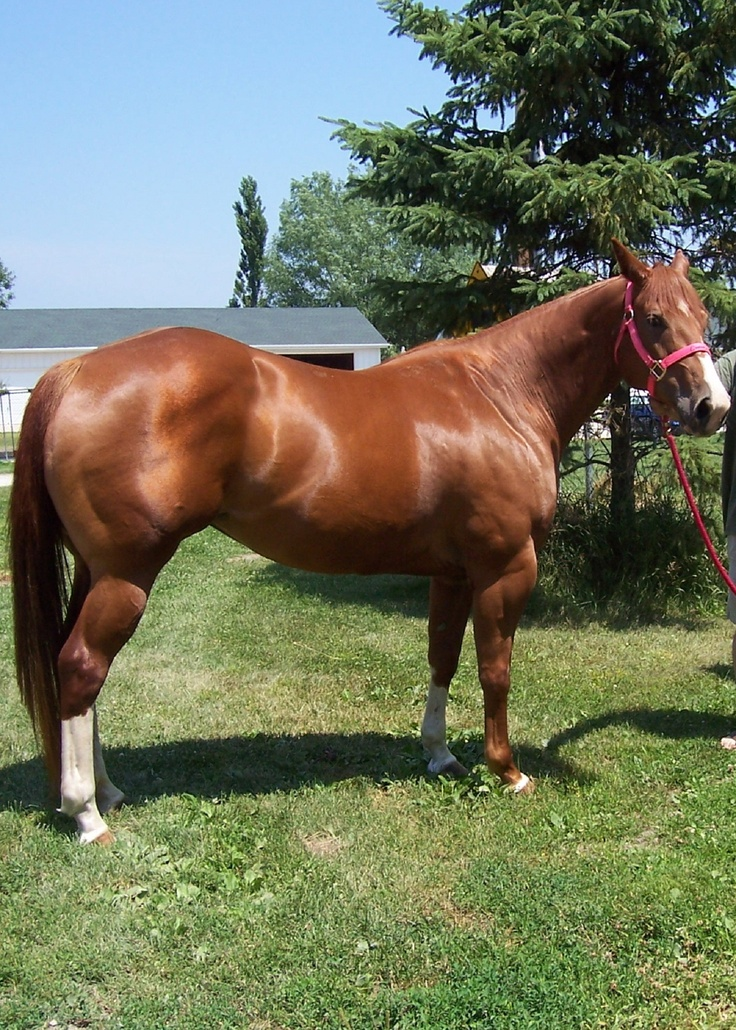 My Paint mare, Emmy. She's 9 yrs. old (2012). She is by far, the most gentlest mare you could ever meet. Very sweet and calm all the time. I love my horses, Emmy and Penny!!!!