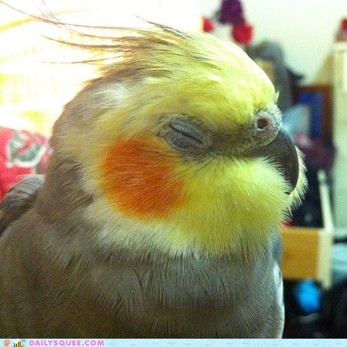 Fluff-Chops! I love the expression and sweet little contented sounds my birdie makes!