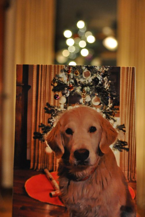 Dear Photograph,  This Christmas just won't be the same without you here.  Bobbi