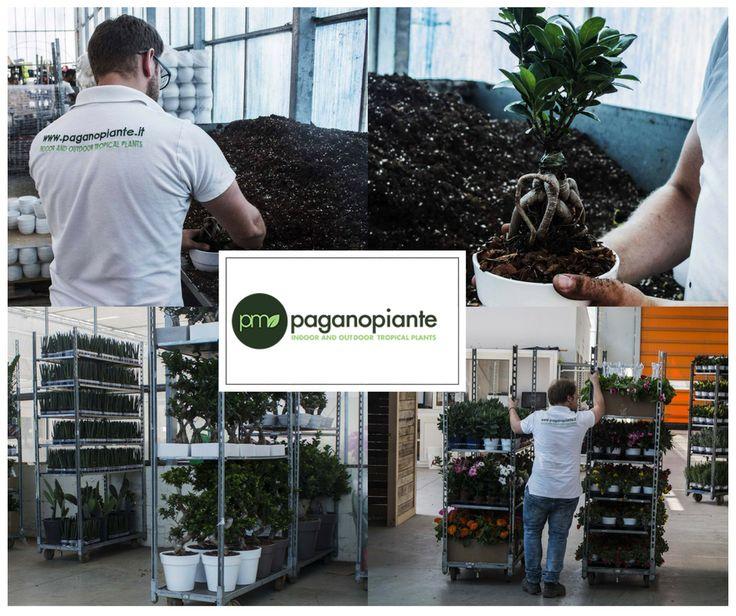 Per garantire ai nostri clienti il massimo della qualità, piante in ottima salute e assistenza, seguiamo tutti i dettagli e non perdiamo mai di vista un passaggio del processo cura-vendita. #Paganopiante