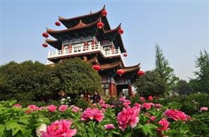 Luoyang Peony Culture Festival