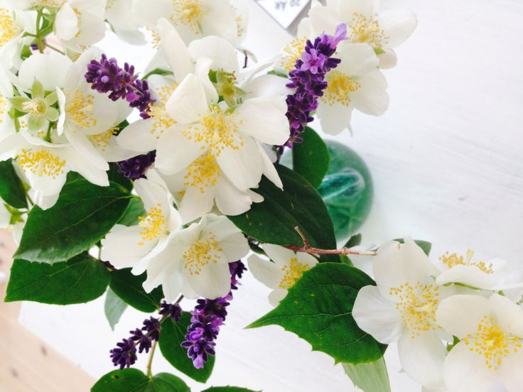 Wonderful jasmin and lavender from the garden