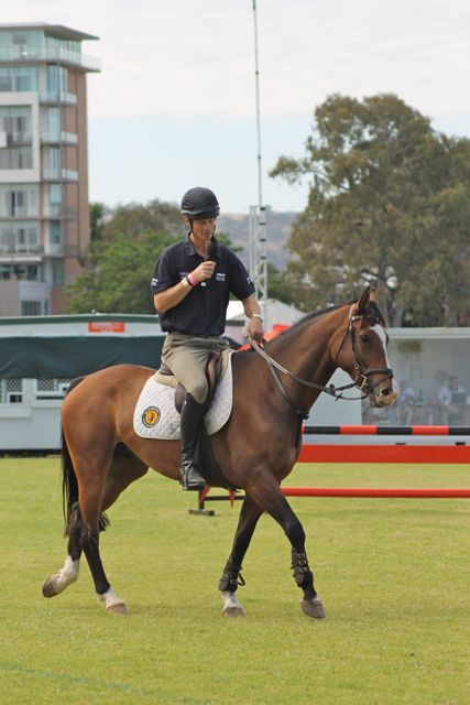 """""""Neck straps are not just for beginners"""" says William Fox-Pitt   An Eventful Life"""