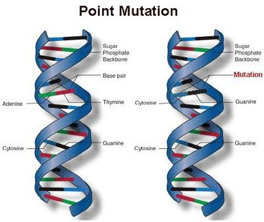 A point mutation changes a single nucleotide base pair.
