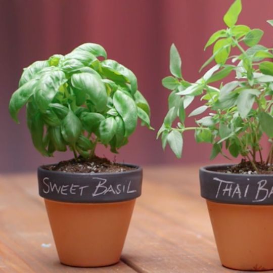 Charming & Changeable Chalkboard Pots. Chalk this idea up to pure genius.