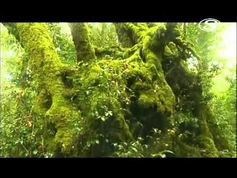 Destne pralesy tajemstvi zivota - YouTube