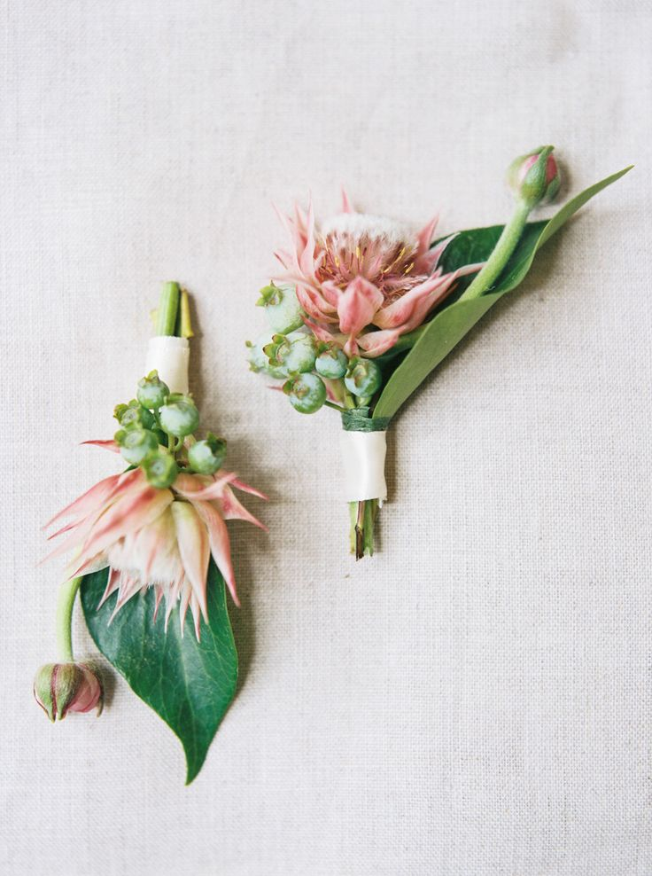 Clementine Botanical Art // Blushing Bride Protea // Boutonniere // Taylor Lord Photography