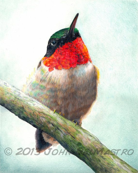 Color Pencil Drawing - Hummingbird Drawing - Giclee Print by John DelMastro on Etsy, 26,03 €