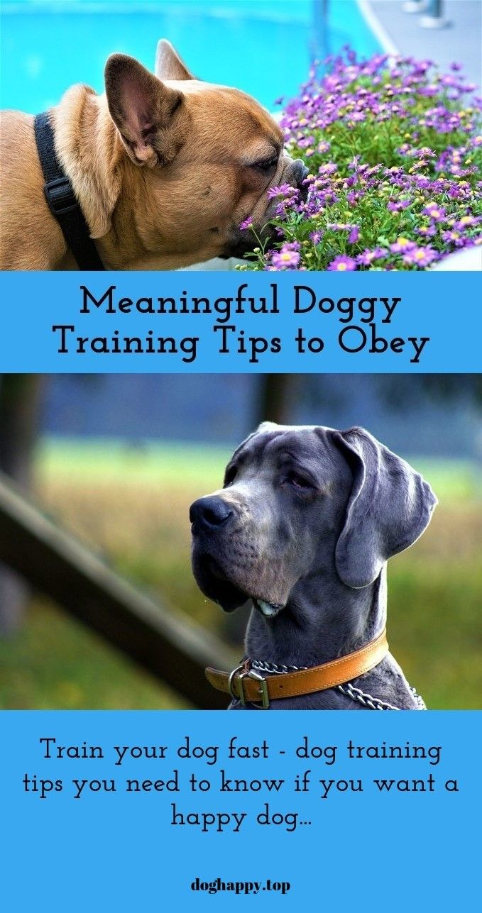 Advice For Training Your Dog Quickly And Efficiently Training