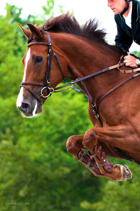The horses paw and prance and neigh, Fillies and colts like kittens play, And dance and toss their rippled manes Shining and soft as silken skeins;... -Oliver Wendell Holmes