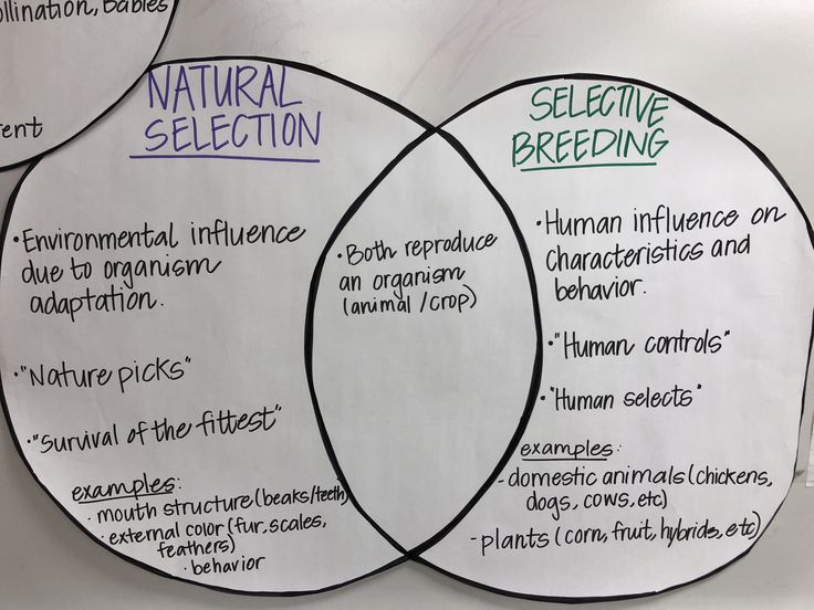 Natural Selection V Selective Breeding  7th Grade Science   With Images