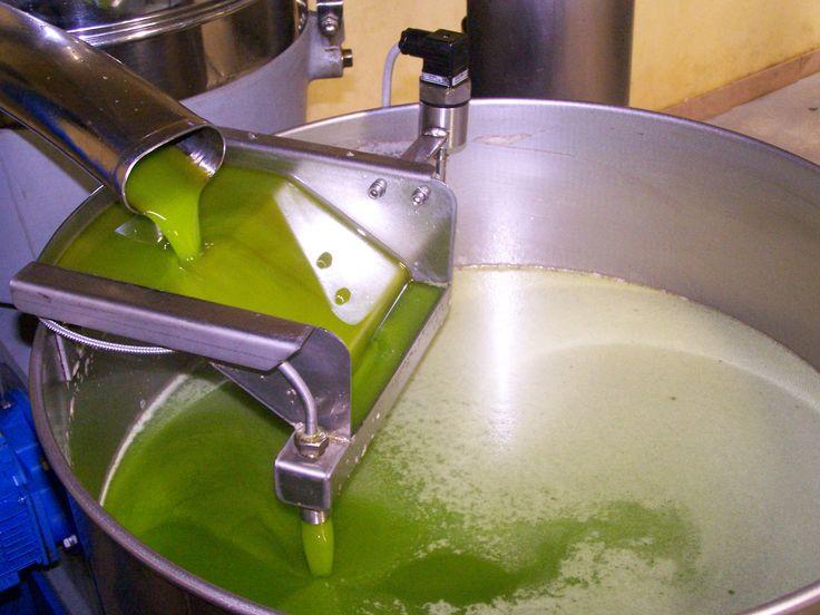 Huile d'olive à la sortie de la centrifugeuse