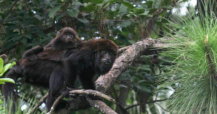 O canal National Geographic, parte da Fox Networks Group, começou a exibir em sua programação no Brasil uma campanha de conscientização s...