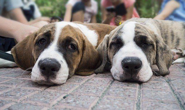 Prohibición de los Criaderos de Perros! FIRMA Y COMPARTE ESTA PETICIÓN AHORA!