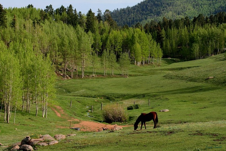 Grazing in the mountains around Victor, Colorado