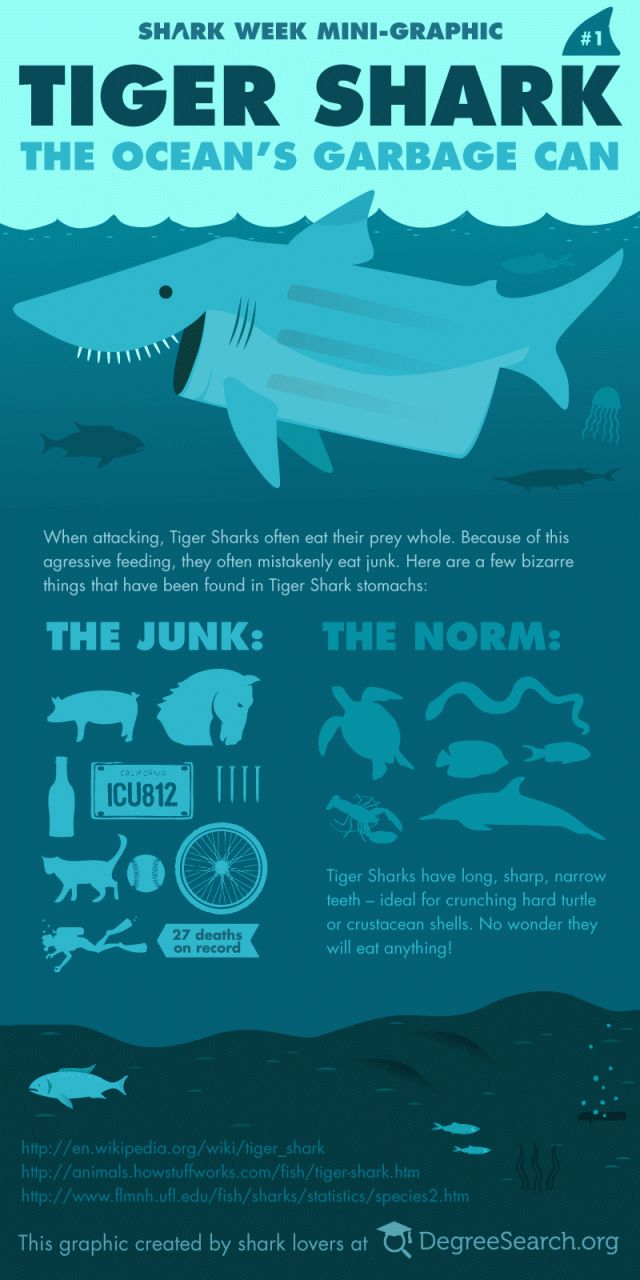 The Garbage Can of the Sea. Top 10 Fun Facts About Tiger Sharks! - Cool and Interesting Facts for Kids