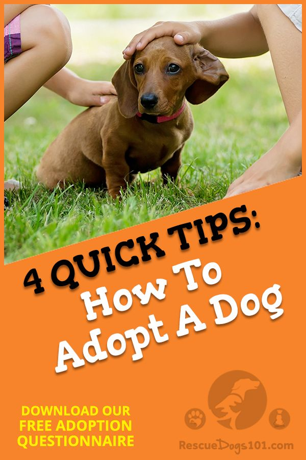 Adopt Your Perfect Dog Dogs Kids Dogs Rescue Puppies
