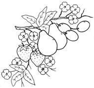 Worksheet. 229 mejores imgenes de frutas e legumes en Pinterest  Dibujos